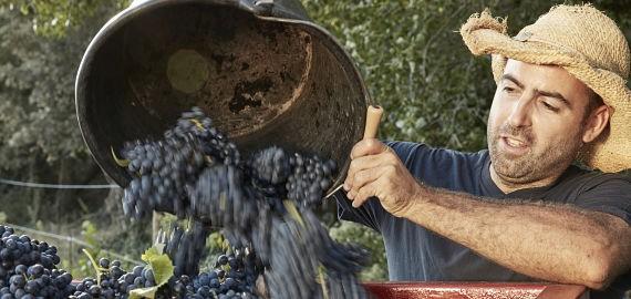 Organic & Bio-Dynamic Rhône Wine Tour