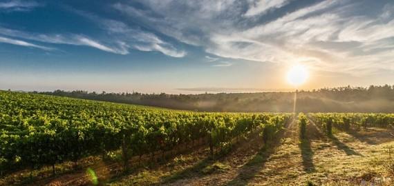 gorgeous vineyards views